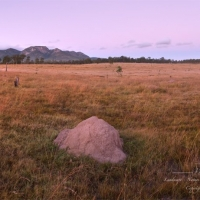 Biggenden; Mt Walsh and The Bluff Sunrise Moon, panorama