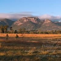 Biggenden; Mt Walsh and The Bluff Sunrise Panorama
