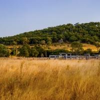 Raglan Field of Gold